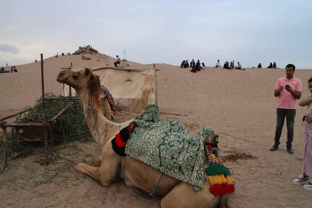 شتر سواری در کویر یزد
